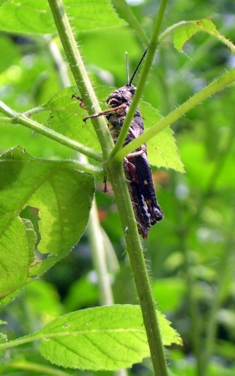 cicada100yrtreetrail